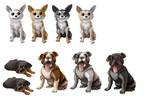 Dogs charadesign
