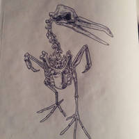 bird by kadjura