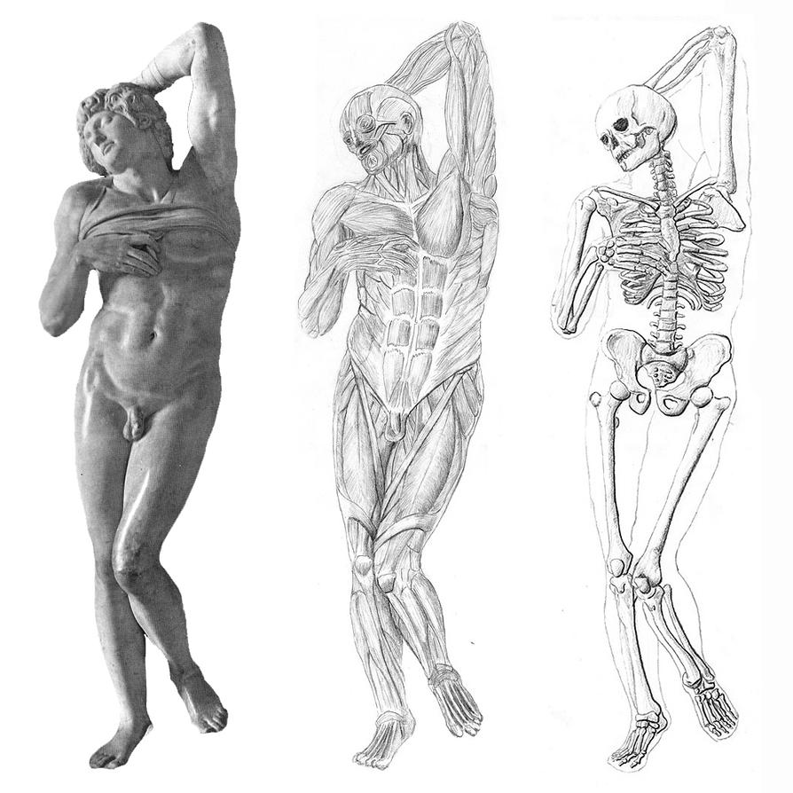 Michelangelo Anatomy Study by magicwindow on DeviantArt
