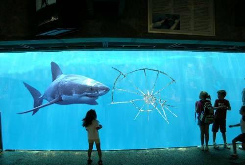 shark by black-cat-of-DOOM