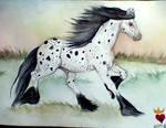 Horse-Irish-Dreams