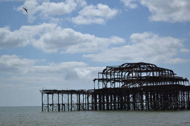 Gull fying over old Brighton Pier