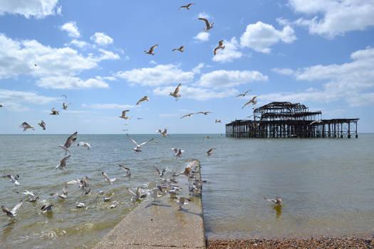 Gulls feeding by the old pier