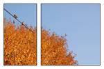 Autumn Trill