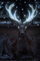 Glowing Stag