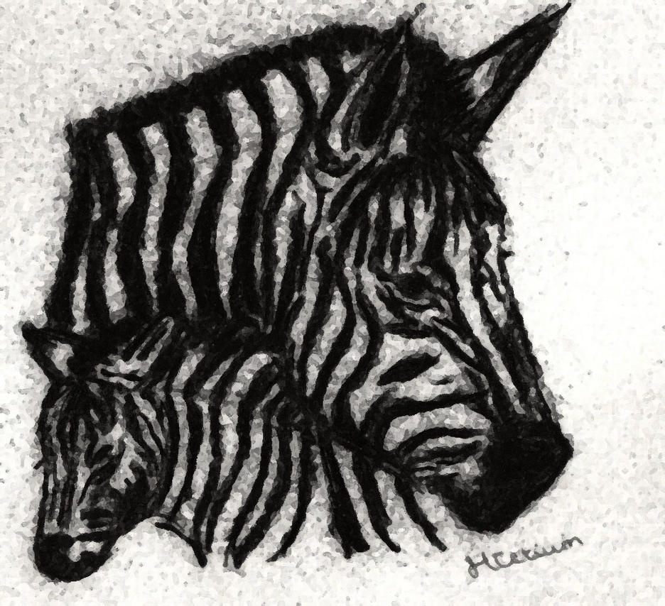 Zebra by Myrhis
