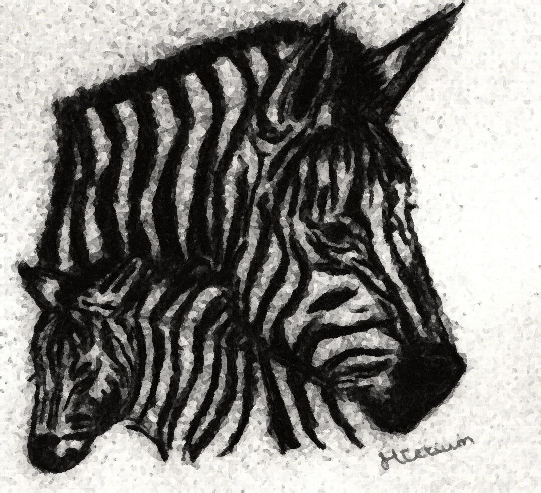 Zebra by Myrhis