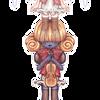 RO - Viola by kapris-art