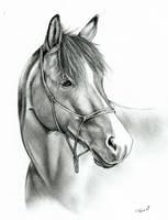 A horse by Adniv