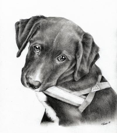 Puppydog by Adniv
