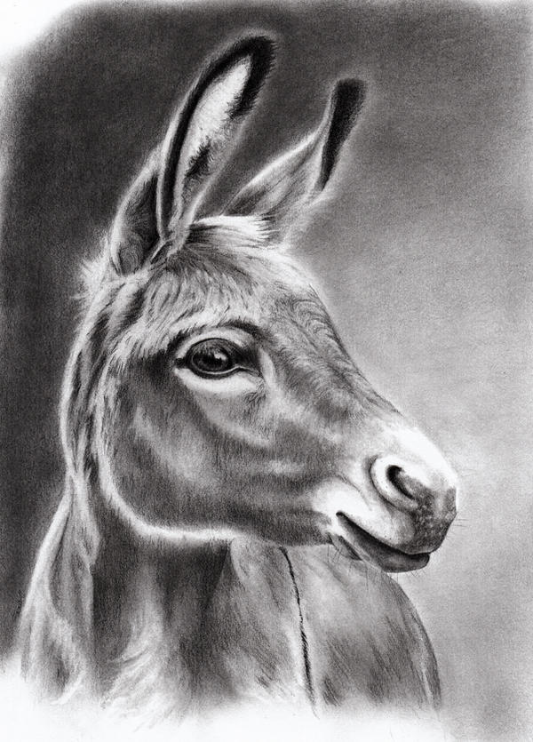 Donkey by Adniv