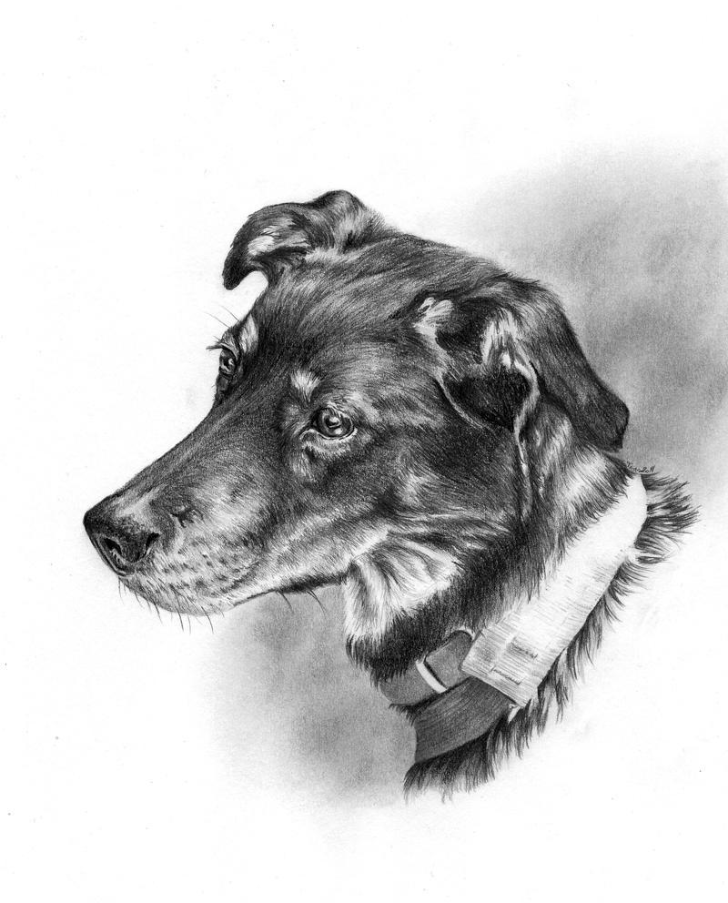 Laika the dog by Adniv