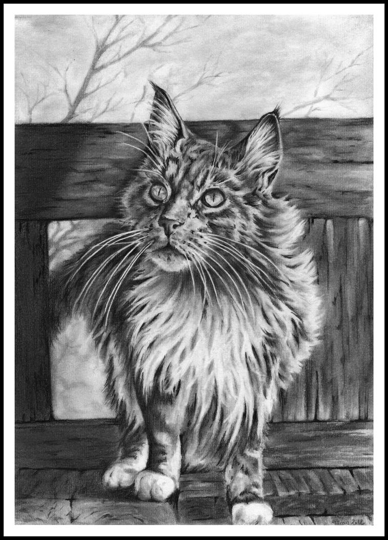 Hairy Cat by Adniv
