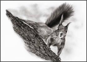 Squirrel by Adniv