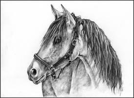 Horse portrait by Adniv