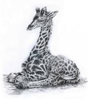 Little Giraffe by Adniv