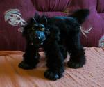Blackwolf by Vlcek