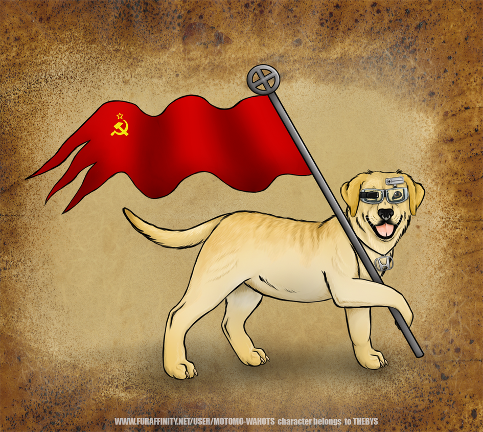 Labrador of judah by Vlcek