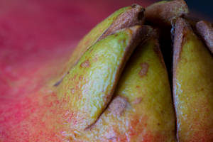 Pomegranate top by Bozack
