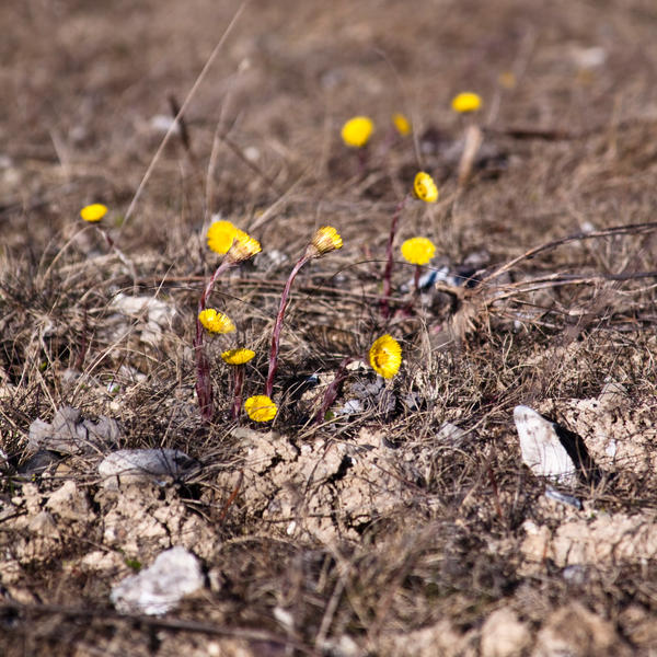 Yellow life by Bozack