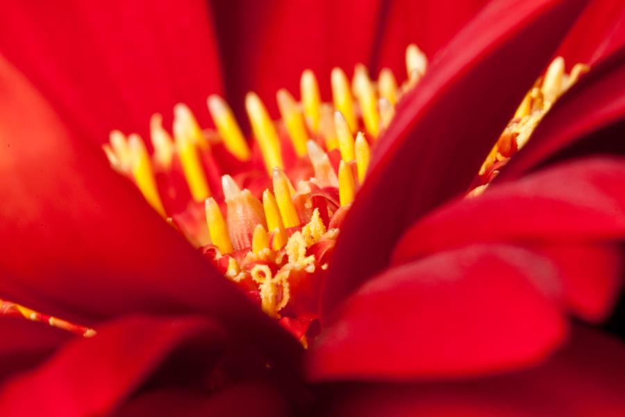 Red petals II by Bozack
