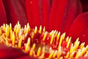 Red petals III by Bozack