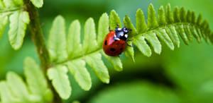 Ladybug I by Bozack