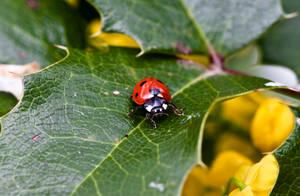 Ladybug III by Bozack