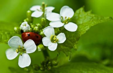 Ladybug VI by Bozack