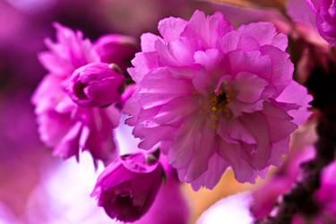 Pink by Bozack