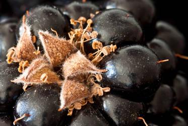 Blackberry forest I by Bozack