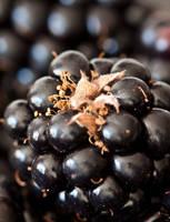 Blackberry forest II by Bozack
