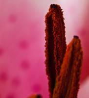 Lily pink 3 by Bozack