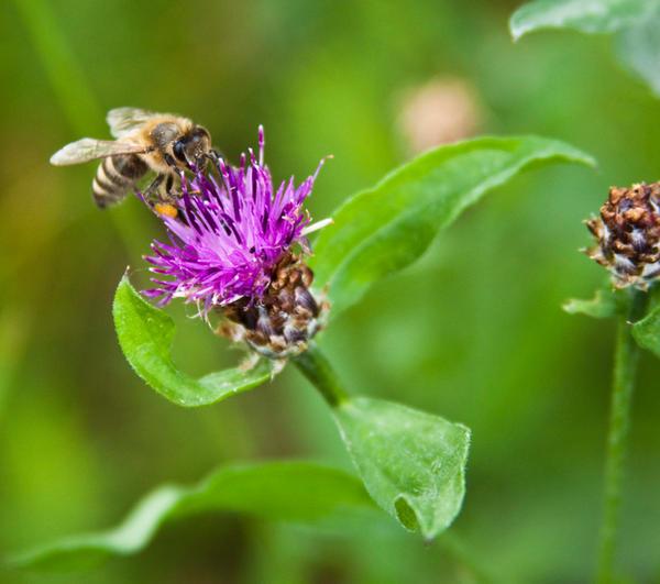 Pollen collector I by Bozack