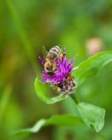 Pollen collector II by Bozack