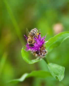 Pollen collector II