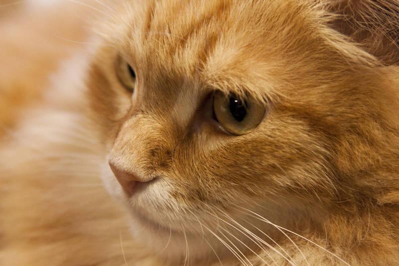 Feline life I by Bozack