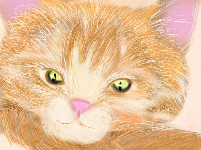 orange cat by momiji-aya