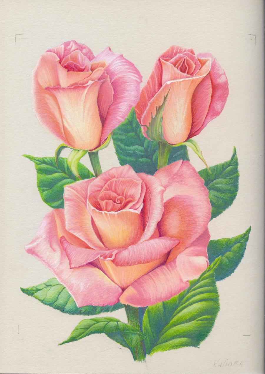 pink roses by 1976Kunako on DeviantArt