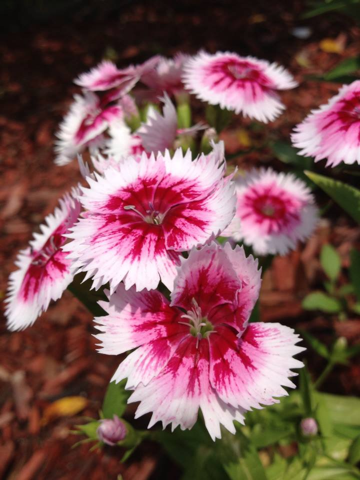 Pink and white flowers by leve726 on deviantart pink and white flowers by leve726 mightylinksfo