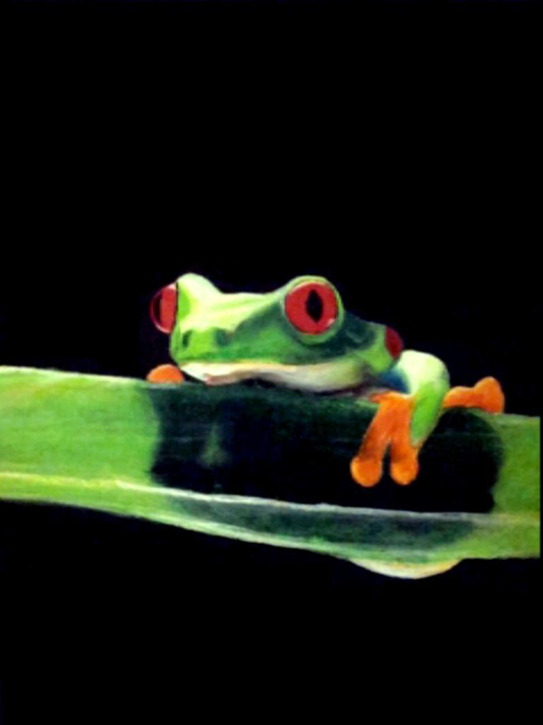 Gaudy Leaf Frog by perciusjango