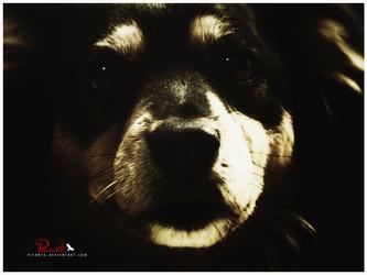 Dog-Faced