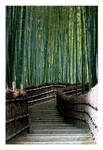 Bamboo Forest by Utopia2501