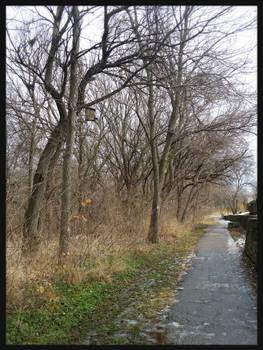 Dreary Winter's Walk