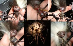 Ghosties - Bug Ladies - WIP by bleaknimue