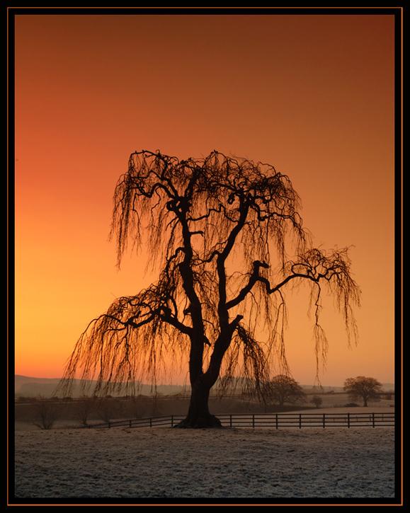 Frosty Sunrise by gordonrae
