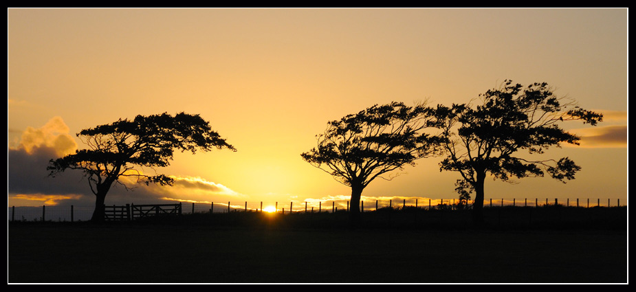 Three's Company by gordonrae