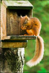 Just Nuts about Nuts