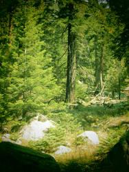 Forest Spirit by BlopaLFC
