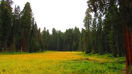 Yellow Meadow by BlopaLFC